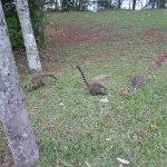Foto de Iguacu National Park