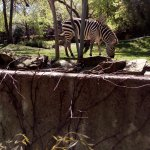 Foto de Fort Worth Zoo