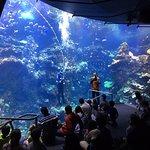 Diver Q&A in the aquarium