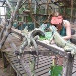 Iguana Project