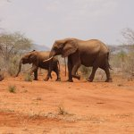 OUR RESIDENT ELEPHANTS