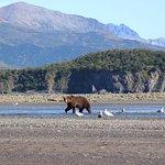 Notre premier ours en Alaska.