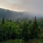 Evening fog rolls in in the valley in front of our #7 campsite.