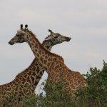 Foto de Parque Nacional de Nairobi