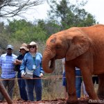 Guest enjoying the baby elephants as they listen to the history of all the elephants at the cent