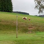 Kaltenbach Hotel Foto