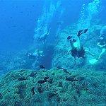 Explored aquatic plants & sea creatures!