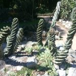 Cati gardens