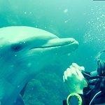 Photo of Ocean Encounters Diving