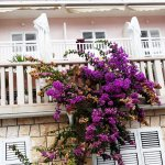 Foto de Youth Hostel Villa Marija