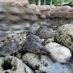 Turtles or tortoise?