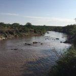 Foto de Serengeti Hippo Pool (Charca de Hipopótamos del Serengeti)