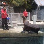 Vancouver Aquarium Foto