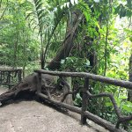 Photo of Arenal Hanging Bridges