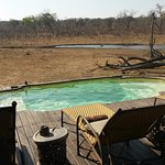A view of the watering hole from the pool.