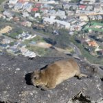 Cute Critters at the Top
