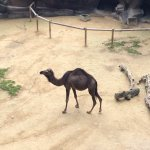 Photo of Antwerp Zoo (Dierentuin)
