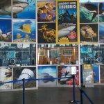 Photo of L'Aquarium de Barcelona