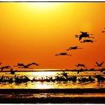 Foto de Protea Hotel Walvis Bay Pelican Bay