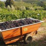 Agriturismo Renai e Monte-bild