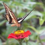 Bilde fra Vallarta Botanical Gardens