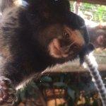 Foto di Monkey Park