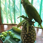 The male parrot hanging out on our produce in the kitchen!