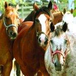 Photo de Rocking Horse Ranch Resort