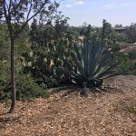 Trees for Health Garden in Balboa Park