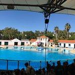 O zoo mais incrível q já visitei . Vale muito assistir o show dos golfinhos e à vista de cima pe