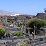 Photo de Jardin de Cactus