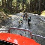 Huskies pull a wheeled cart