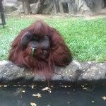Photo of Dusit Zoo