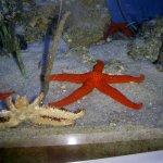 brightly coloured starfish
