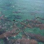 Photo de Réserve marine de Hol Chan