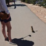 Some of the squirrels can be quite demanding at the canyon.