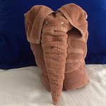 Who is the elephant in the room?