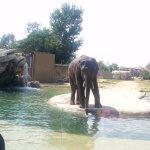 Its Elephant time..