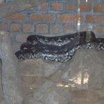 Photo de Madras Crocodile Bank