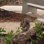 The Squirrel