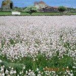 Abito a Nuoro (Sardegna). Diversi ORGANI nelle chiese, MUTI per disposizione del Vescocvo.