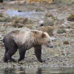 Grizzly Bear Lodge & Safari照片