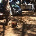 Photo de Camping Bon Repos