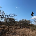 Photo of Hoedspruit Endangered Species Centre