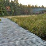 Dog walk trail through the wetlands.
