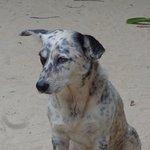 Foto de Grand Bahia Principe El Portillo