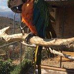 Photo of Amazonas Park