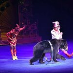 Photo of Chimelong International Circus
