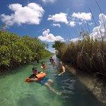Floating down biosphere