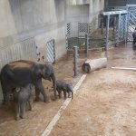 The elephants were inside because of the cold weather, but they have a wide exterior space.